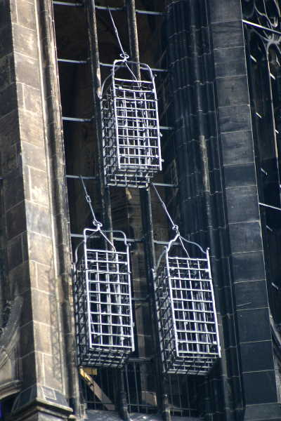 Cages hanging on the Munster spire.